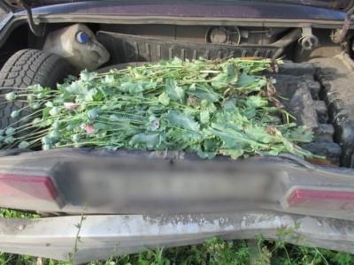 В Удмуртии сотрудниками полиции с начала года выявлено 16 наркопритонов