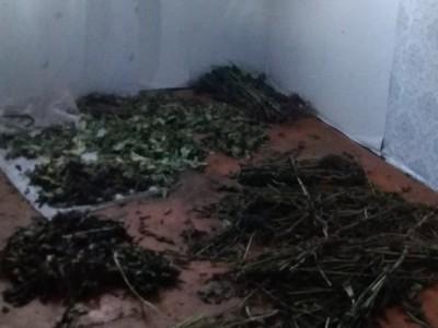 4 килограмма маковой соломы изъяли полицейские у жителя Увинского района